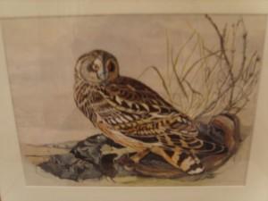 Humphrey Price Jones, Owl, Wildlife, Water Colour