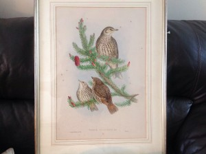 John Gould, Lithograph, Hand Coloured, Birds of Britain
